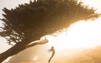 Infolettre #57 – Vivons nos émotions et cultivons l'espoir